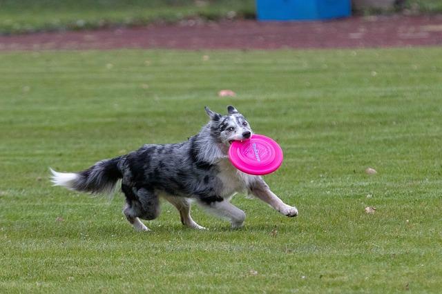 ספורט יחד עם הכלב