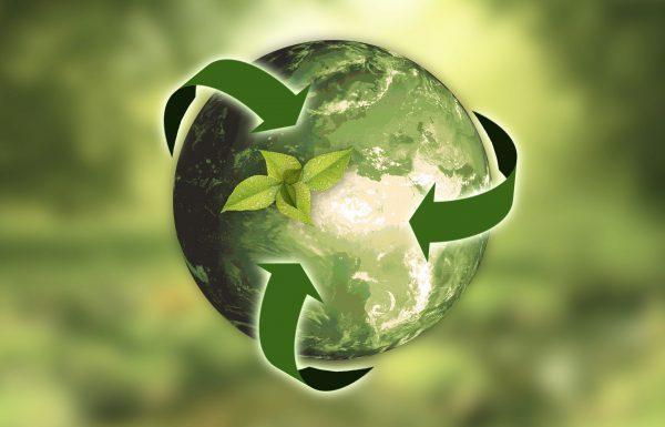 הפרדת פסולת ואיכות הסביבה: אילו פתרונות אקולוגיים קיימים לעסקים?