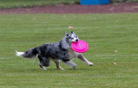 כל הדרכים לעשות ספורט יחד עם הכלב